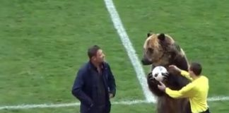 not-bear-able-animal-rights-groups-slam-russia-football-league-for-making-grizzly-bear-perform-tricks-during-game