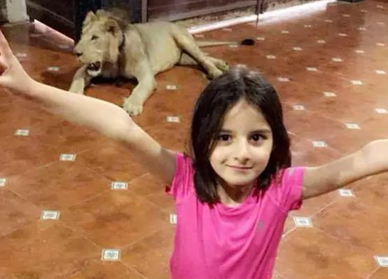 shahid-afridis-daughter-celebrates-wicket-dads-style-lion-background